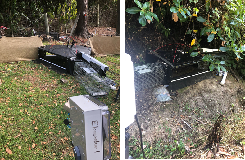 3x1 and 2x2 traps at our Akaroa test site