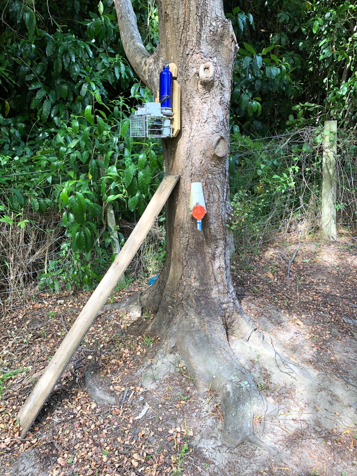 Automatic possum traps test setup