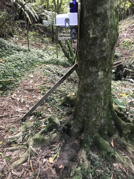 Tree mounted trap