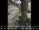 Tree Trap