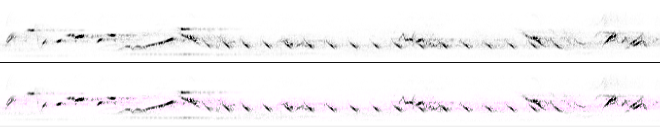 spectrograph of some birdsong